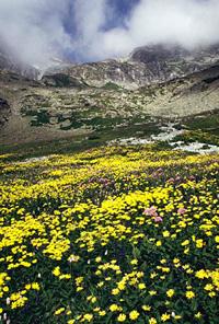Virágos völgy - Magas-Tátra, 1988